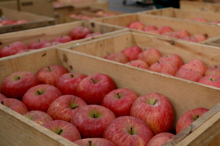 八百屋やまはる りんご